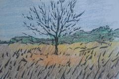 Herfstboom op het veld
