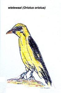Wielewaal (Oriolus oriolus) inspireerde oa Tournemire